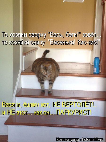 """Котоматрица: То хозяин сверху """"Вась, беги!"""" зовёт... то хозяйка снизу: """"Васенька! Кис-кис!"""" Вася ж, ёшкин кот, НЕ ВЕРТОЛЁТ!.. и НЕ этот... как он... ПАРКУРИСТ!"""