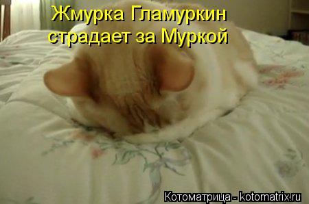 Котоматрица: Жмурка Гламуркин страдает за Муркой