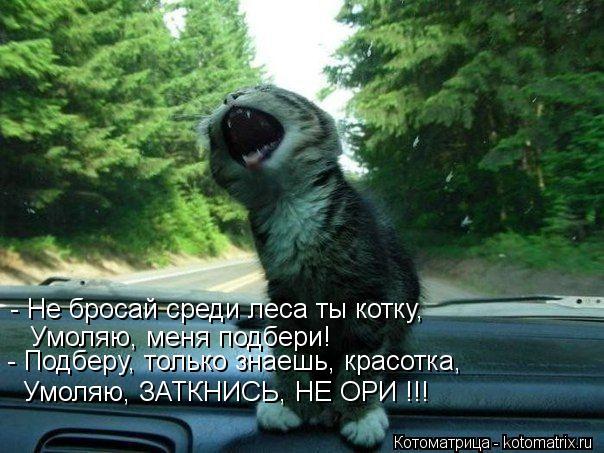 Котоматрица: - Не бросай среди леса ты котку, Умоляю, меня подбери! - Подберу, только знаешь, красотка, Умоляю, ЗАТКНИСЬ, НЕ ОРИ !!!