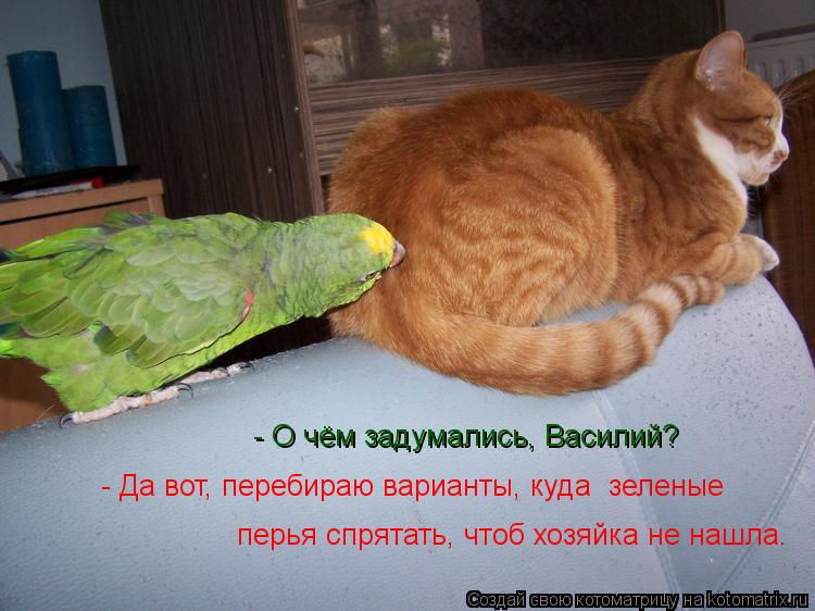 Котоматрица: - О чём задумались, Василий? - Да вот, перебираю варианты, куда  зеленые перья спрятать, чтоб хозяйка не нашла.