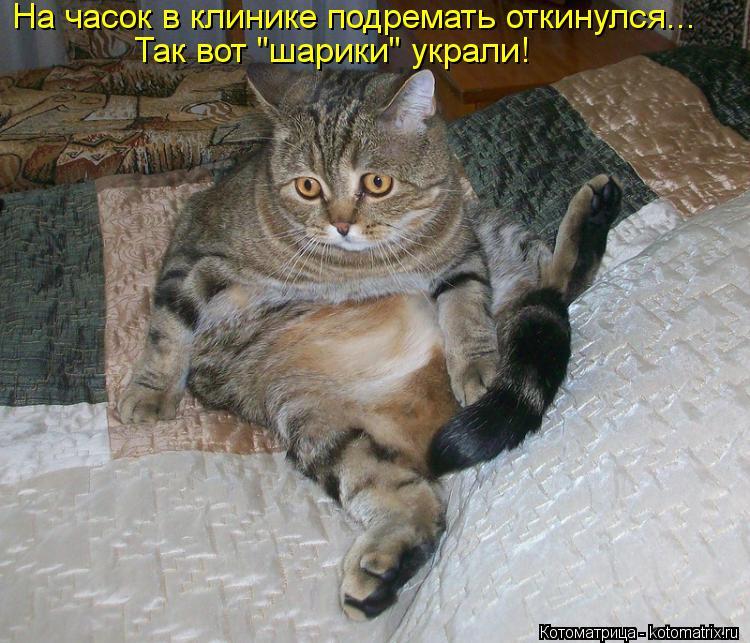 """Котоматрица: На часок в клинике подремать откинулся... Так вот """"шарики"""" украли!"""