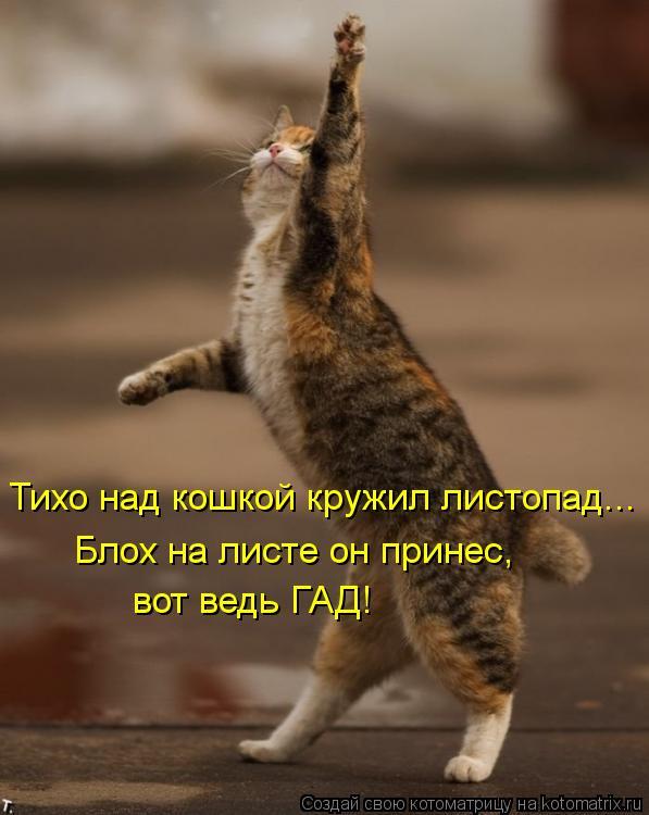 Котоматрица: Тихо над кошкой кружил листопад... Блох на листе он принес, вот ведь ГАД!
