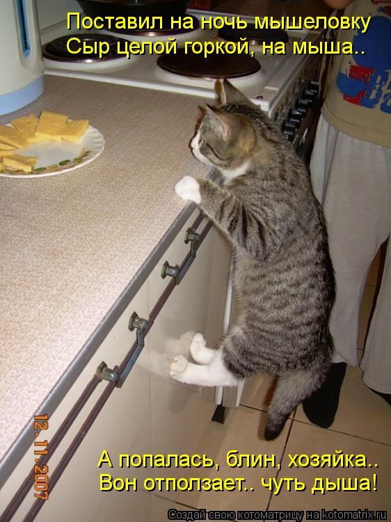 Котоматрица: Поставил на ночь мышеловку Сыр целой горкой, на мыша.. А попалась, блин, хозяйка.. Вон отползает.. чуть дыша!