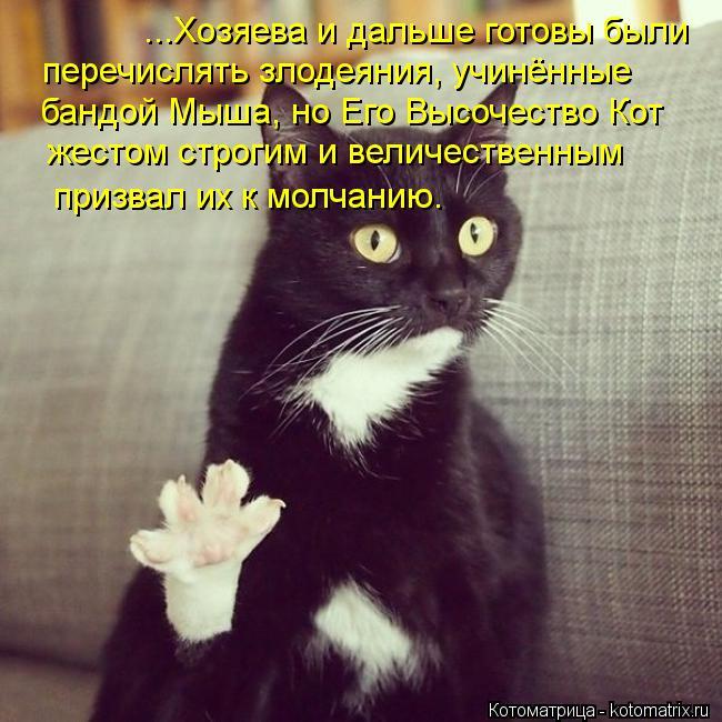 Котоматрица: ...Хозяева и дальше готовы были  перечислять злодеяния, учинённые  бандой Мыша, но Его Высочество Кот жестом строгим и величественным призва