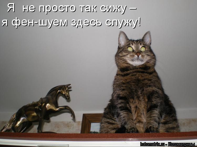 Котоматрица: Я  не просто так сижу –  я фен-шуем здесь служу!