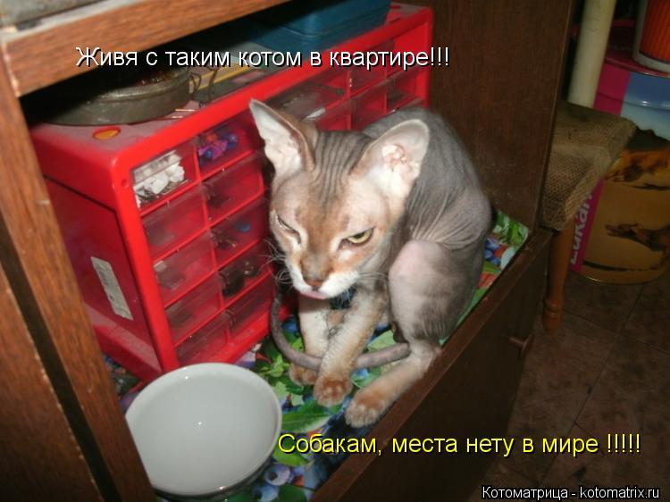 Котоматрица: Собакам, места нету в мире !!!!! Живя с таким котом в квартире!!!