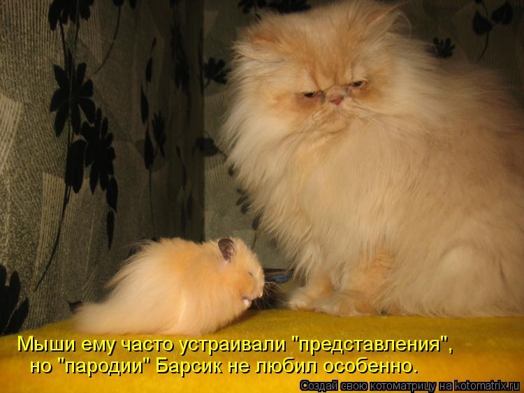 """Котоматрица: но """"пародии"""" Барсик не любил особенно. Мыши ему часто устраивали """"представления"""","""