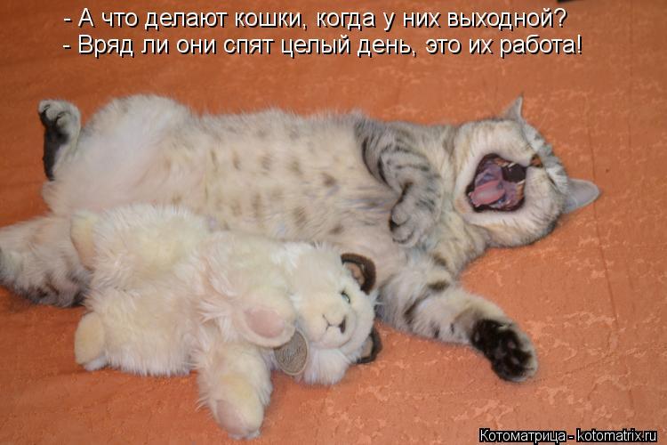 Котоматрица: - А что делают кошки, когда у них выходной? - Вряд ли они спят целый день, это их работа!