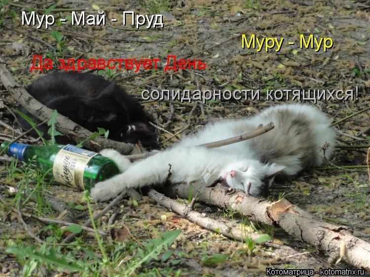 Котоматрица: Мур - Май - Пруд Муру - Мур Да здравствует День солидарности котящихся!