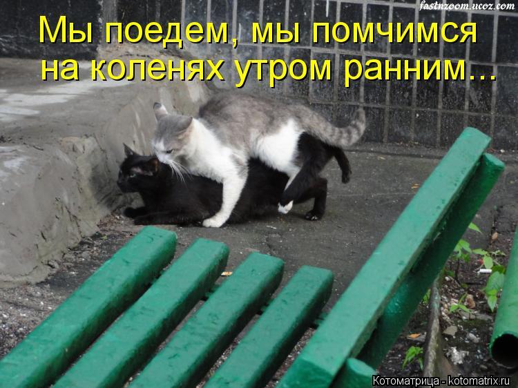 Котоматрица: Мы поедем, мы помчимся на коленях утром ранним...