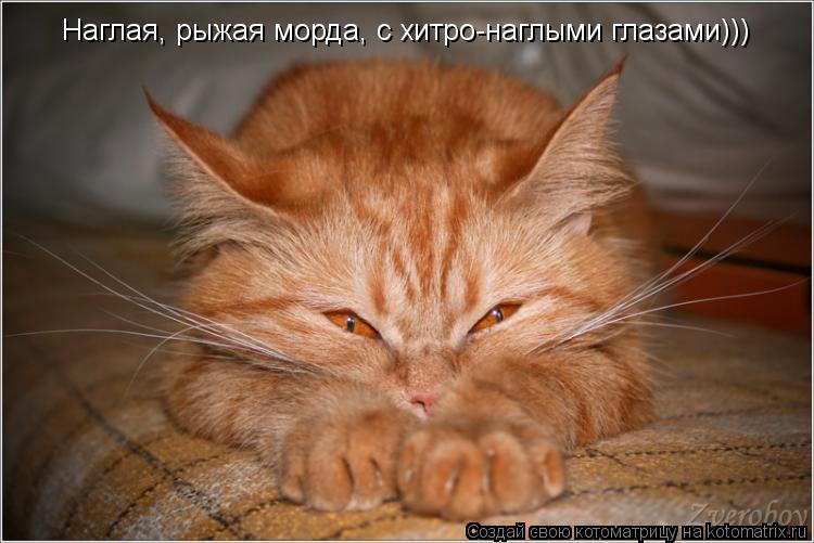 Котоматрица: Наглая, рыжая морда, с хитро-наглыми глазами)))