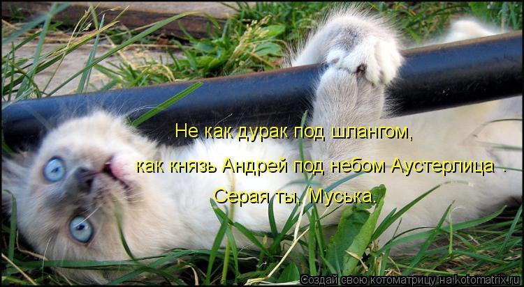 Котоматрица: как князь Андрей под небом Аустерлица Не как дурак под шлангом, Серая ты, Муська. .