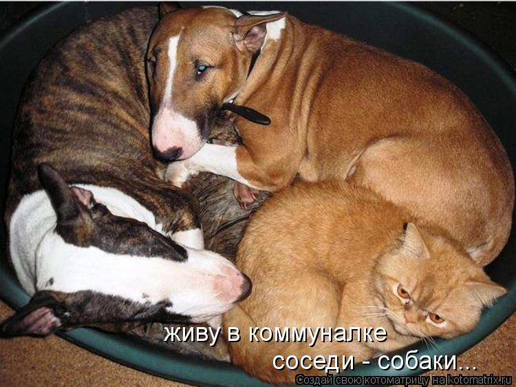 Котоматрица: живу в коммуналке соседи - собаки...
