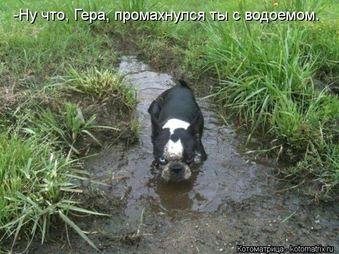 Котоматрица: -Ну что, Гера, промахнулся ты с водоемом.