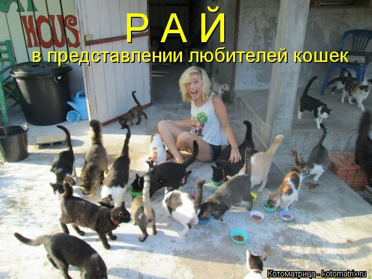 Котоматрица: Р А Й  в представлении любителей кошек