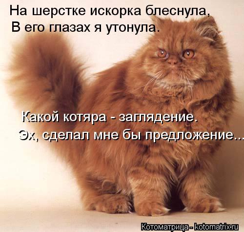 Котоматрица: На шерстке искорка блеснула, В его глазах я утонула. Эх, сделал мне бы предложение... Какой котяра - заглядение.