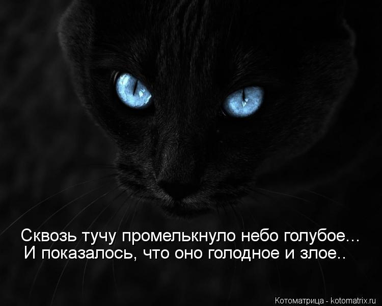Котоматрица: Сквозь тучу промелькнуло небо голубое... И показалось, что оно голодное и злое..