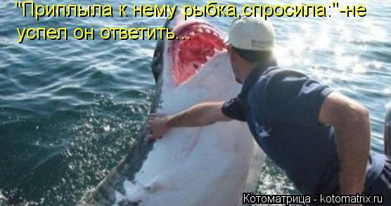 """Котоматрица: """"Приплыла к нему рыбка,спросила:""""-не  успел он ответить..."""