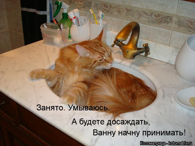 Котоматрица: Занято. Умываюсь. А будете досаждать, Ванну начну принимать!