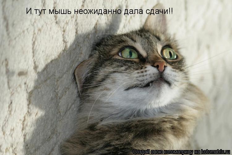 Котоматрица: И тут мышь неожиданно дала сдачи!!