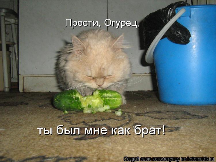Котоматрица: Прости, Огурец, ты был мне как брат!