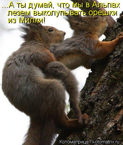 Котоматрица: ...А ты думай, что мы в Альпах лезем выколупывать орешки из Милки!
