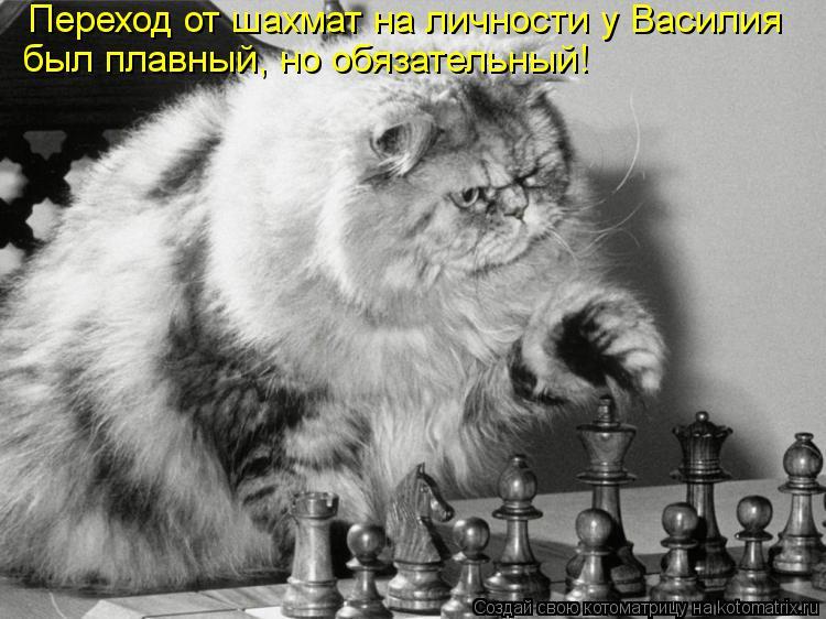 kotomatritsa_T.jpg