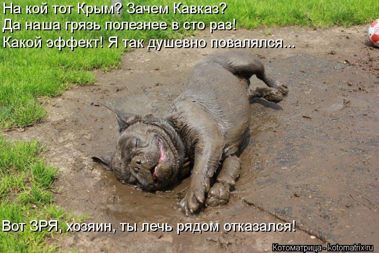 Котоматрица: На кой тот Крым? Зачем Кавказ? Да наша грязь полезнее в сто раз! Какой эффект! Я так душевно повалялся... Вот ЗРЯ, хозяин, ты лечь рядом отказал