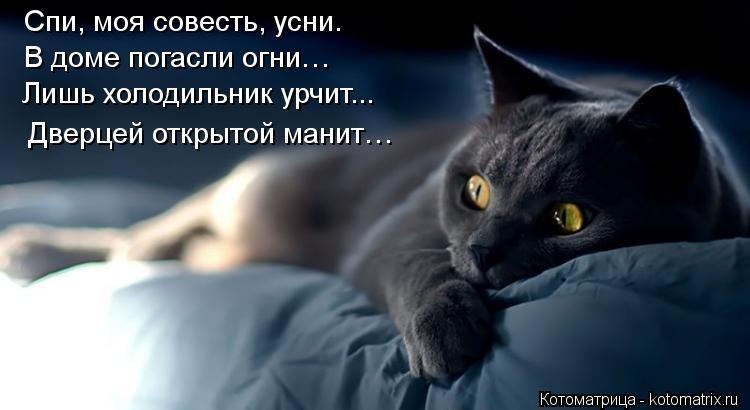 Котоматрица: Спи, моя совесть, усни. В доме погасли огни…   Лишь холодильник урчит...  Дверцей открытой манит…