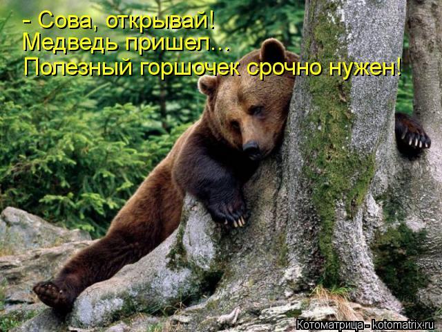 Котоматрица: - Сова, открывай! Медведь пришел... Полезный горшочек срочно нужен!
