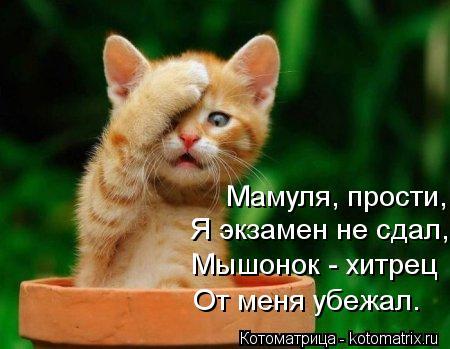 Котоматрица: Мамуля, прости, Я экзамен не сдал, Мышонок - хитрец От меня убежал.