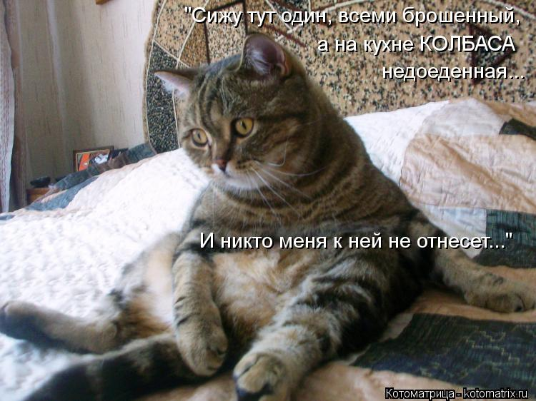 kotomatritsa_I4.jpg