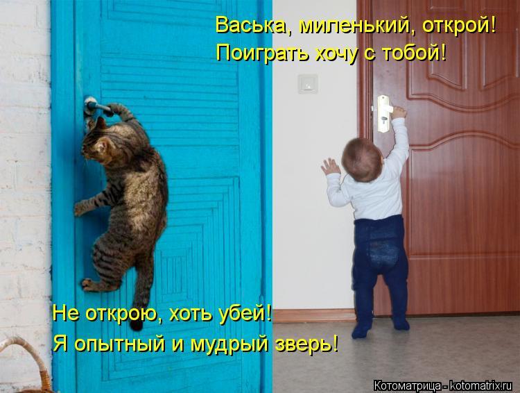 Котоматрица: Васька, миленький, открой! Поиграть хочу с тобой! Не открою, хоть убей! Я опытный и мудрый зверь!