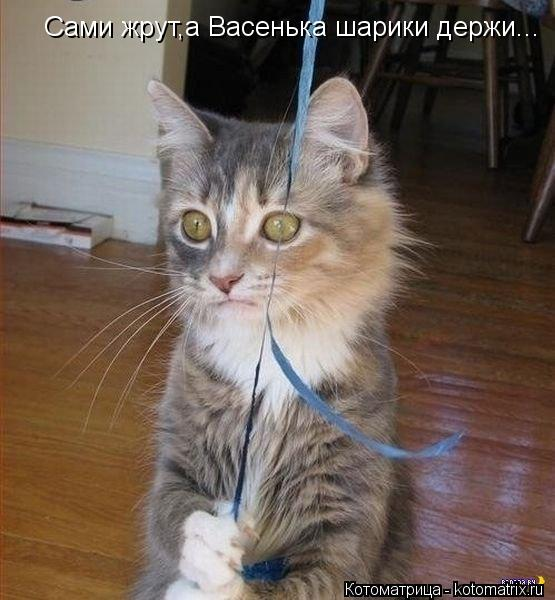 Котоматрица: Сами жрут,а Васенька шарики держи...