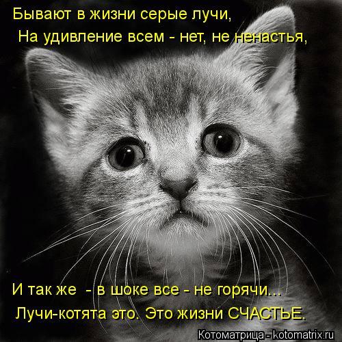 Котоматрица: Бывают в жизни серые лучи, На удивление всем - нет, не ненастья, И так же  - в шоке все - не горячи... Лучи-котята это. Это жизни СЧАСТЬЕ.