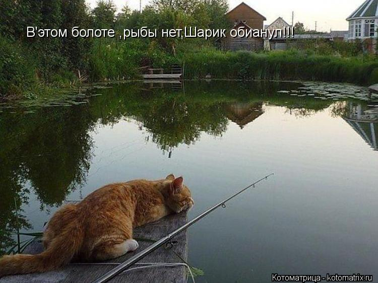 прогноз клева рыбы в кошкино