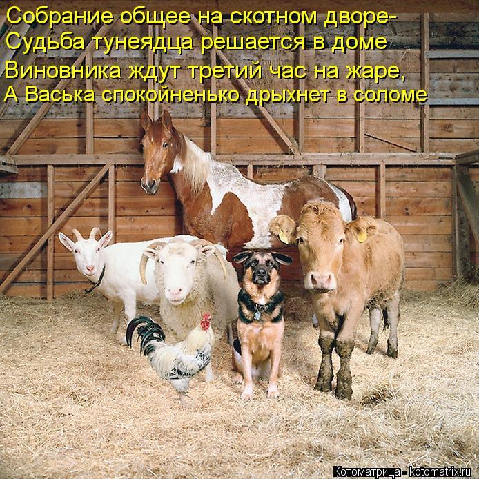 Котоматрица: Собрание общее на скотном дворе- Судьба тунеядца решается в доме Виновника ждут третий час на жаре, А Васька спокойненько дрыхнет в соломе