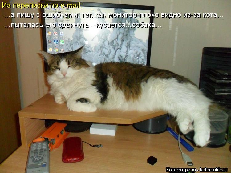Котоматрица: Из переписки по e-mail:  ...а пишу с ошибками, так как монитор плохо видно из-за кота... ...пыталась его сдвинуть - кусается...собака...