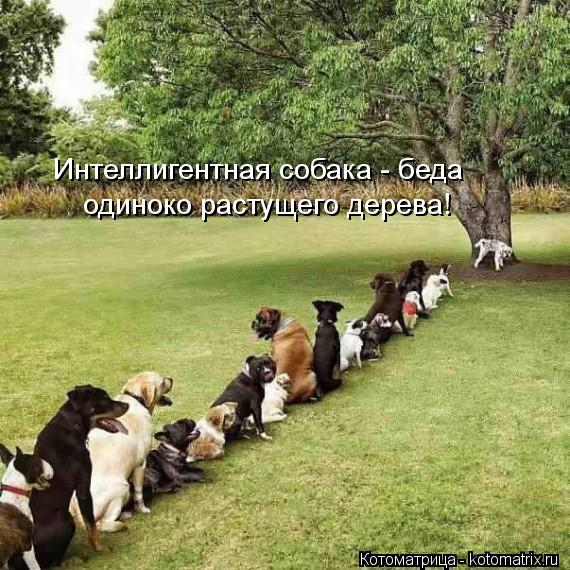 Котоматрица: одиноко растущего дерева! Интеллигентная собака - беда