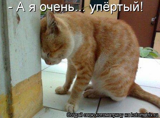 Котоматрица: - А я очень... упёртый!