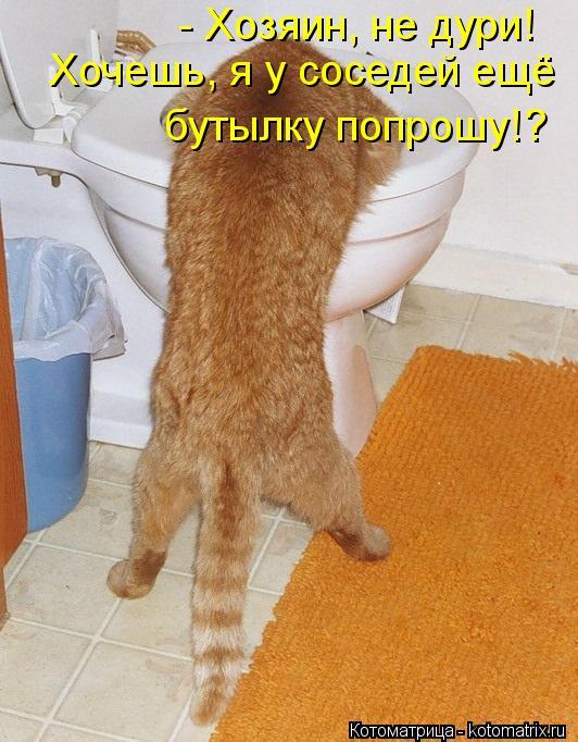Котоматрица: - Хозяин, не дури! Хочешь, я у соседей ещё бутылку попрошу!?