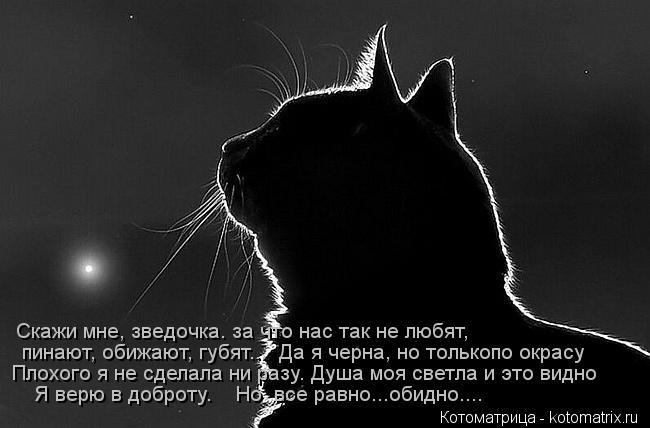 Котоматрица: Скажи мне, зведочка. за что нас так не любят,   пинают, обижают, губят...  Да я черна, но толькопо окрасу  Плохого я не сделала ни разу. Душа моя с