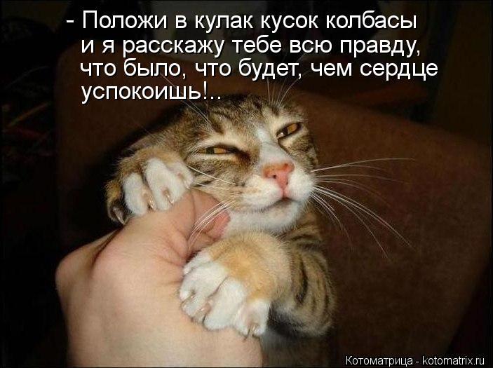 Котоматрица: - Положи в кулак кусок колбасы и я расскажу тебе всю правду, что было, что будет, чем сердце успокоишь!..