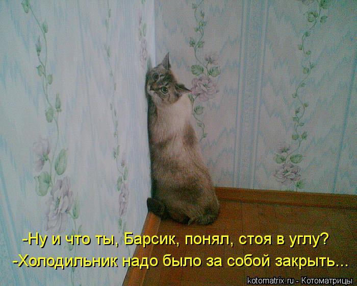 Котоматрица: -Ну и что ты, Барсик, понял, стоя в углу? -Холодильник надо было за собой закрыть...