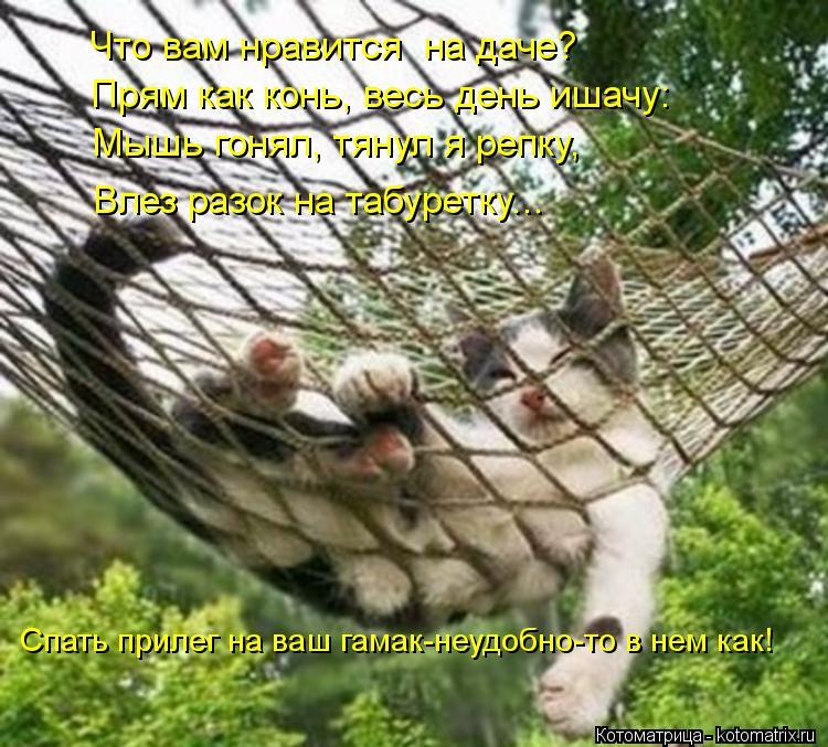 Котоматрица: Что вам нравится  на даче? Прям как конь, весь день ишачу: Мышь гонял, тянул я репку, Влез разок на табуретку... Спать прилег на ваш гамак-неудо