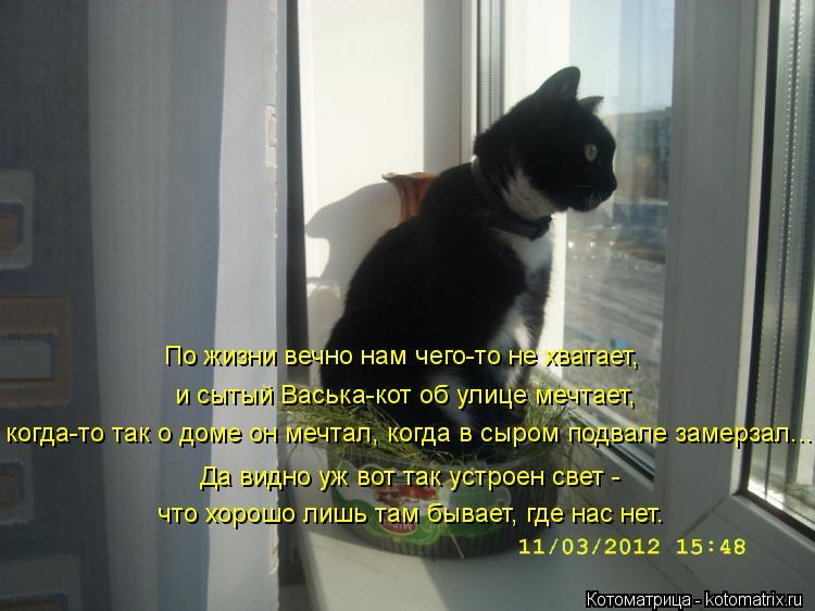 Котоматрица: По жизни вечно нам чего-то не хватает, и сытый Васька-кот об улице мечтает, когда-то так о доме он мечтал, когда в сыром подвале замерзал... Да