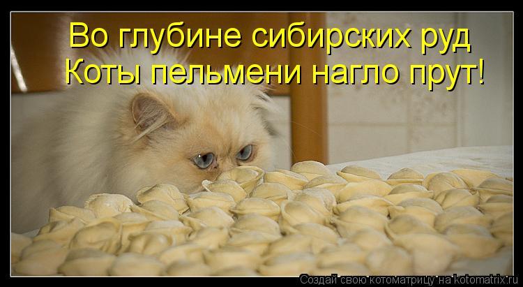 Котоматрица: Во глубине сибирских руд Коты пельмени нагло прут!