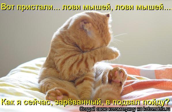 Котоматрица: Как я сейчас, зарёванный, в подвал пойду? Вот пристали... лови мышей, лови мышей....