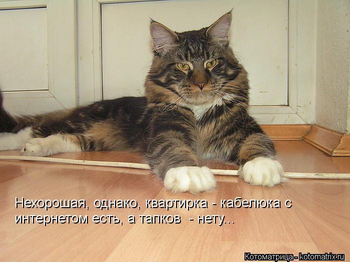 Котоматрица: Нехорошая, однако, квартирка - кабелюка с  интернетом есть, а тапков  - нету...