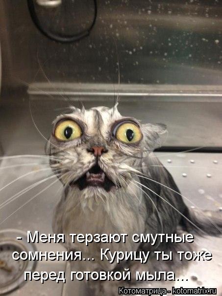 Котоматрица: - Меня терзают смутные сомнения... Курицу ты тоже перед готовкой мыла...